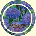 Василек цвет