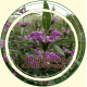 Зопник (Огневик клубненосный)трава