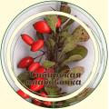 Барбарис плод