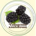 Ежевика ягоды