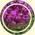 Иван-чай (Кипрей) лист