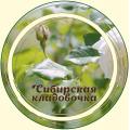 Роза чайная цвет лепестки