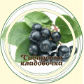Рябина черная плод (арония)