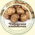 Топинамбур (земляная груша)