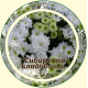 Хризантема цвет