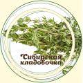 Чабрец (Тимьян ползучий / Богородская трава)