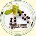 Черемуха плод
